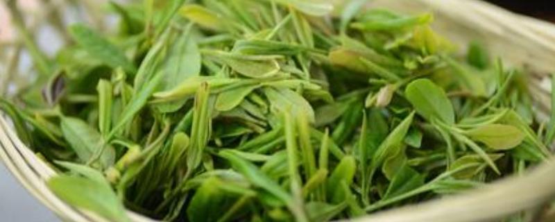 龙井茶的特点